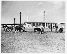 School for the Blind, c.1955--working farm taught vocational skills
