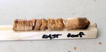 East room dendron sample from the LaPointe Krebs House. Image courtesy of the Sun Herald. http://www.sunherald.com/news/local/counties/jackson-county/article61427667.html