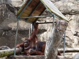 Jackson Zoo 201403